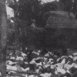 Badung-Puputan-1906