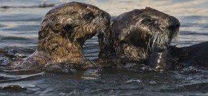 Exxon-Valdez-Oil-Spill-1989