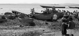 Introduction-of-Nile-Perch-to-Lake-Victoria-1950s-1960s