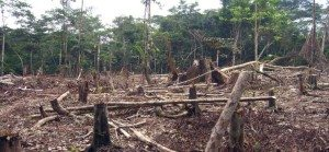 Rainforest-Destruction-20th-and-21st-centuries