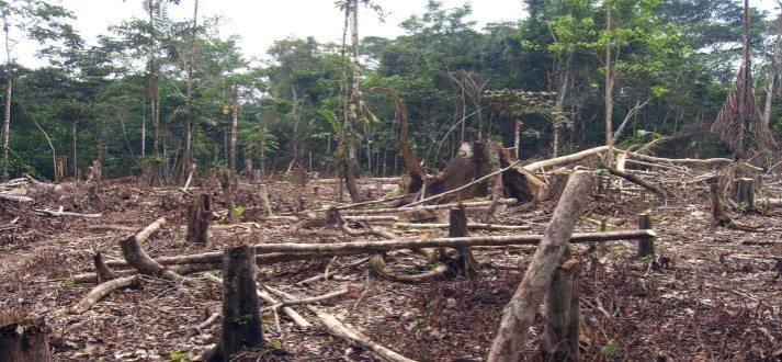Rainforest-Destruction-20th-and-21st-centuries